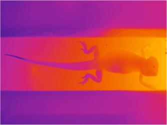Dragon Gradient