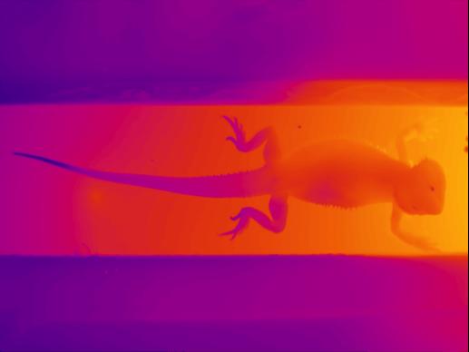 Dragon Gradient