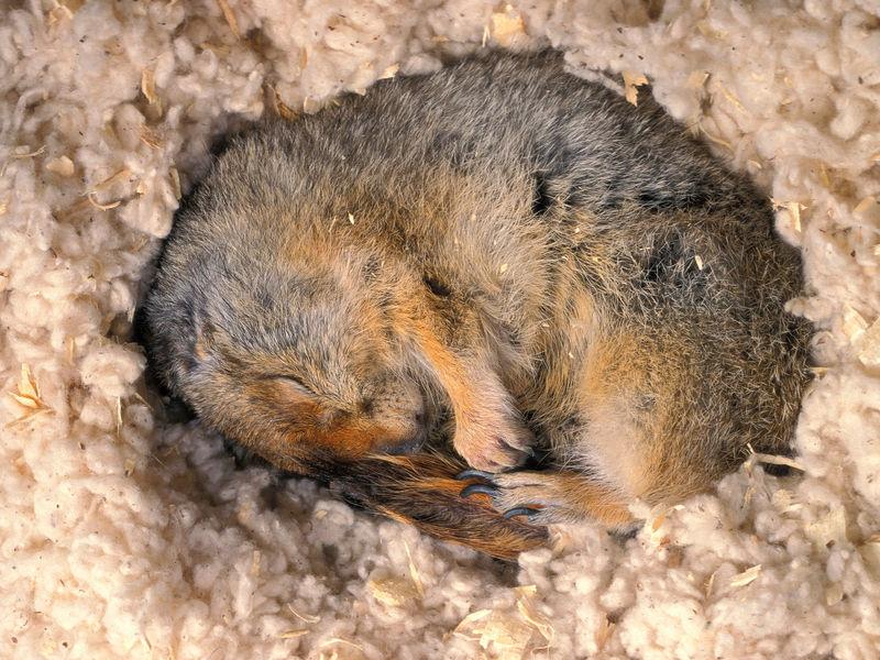 why-do-animals-hibernate-01