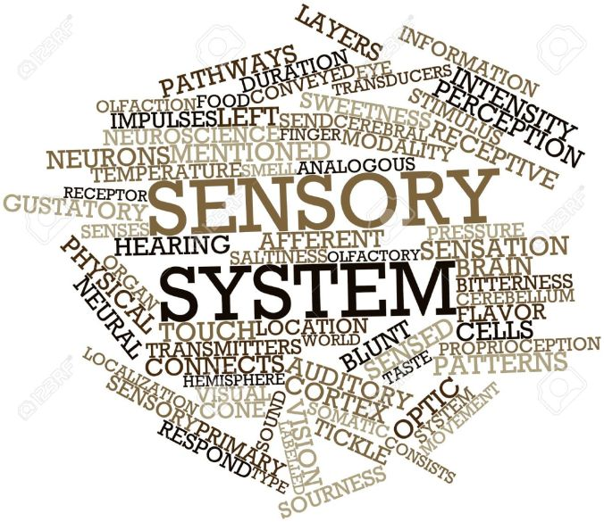 16632980-abstract-word-cloud-for-sensory-system-with-related-tags-and-terms-stock-photo