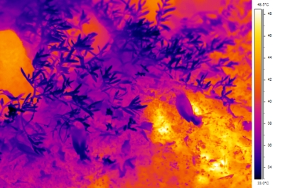 Sample thermal image from ~2 meters