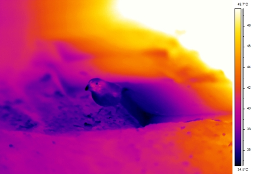 Sample thermal image from ~1 meter (finch hanging out in the shade)